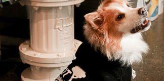 metro detroit pet shops - City Bark
